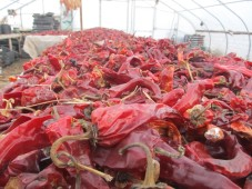 dried red chile
